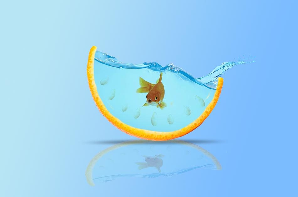 goldfish swimming in an orange rind bowl