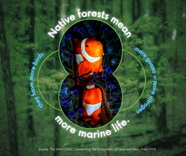 Two Clown Fish amid a forest